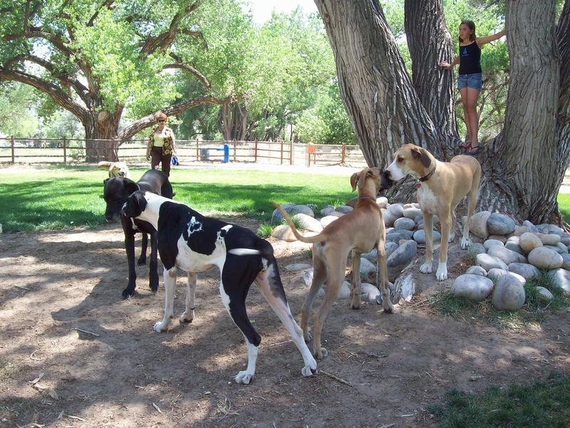 Dog Park Danes